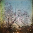 winter is easy by Jill Auville