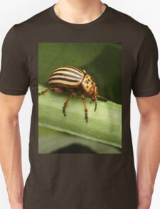 Special Insect T-Shirt