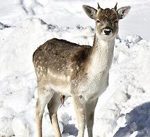 Beginner Antlers by Heather King