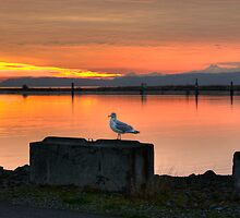Watching the Sun Go Down by Dale Lockwood