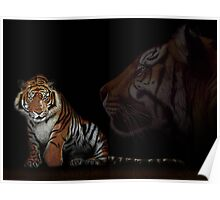 Tiger - colored pencil - drawing Poster