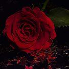 Party Rose by Ann Garrett