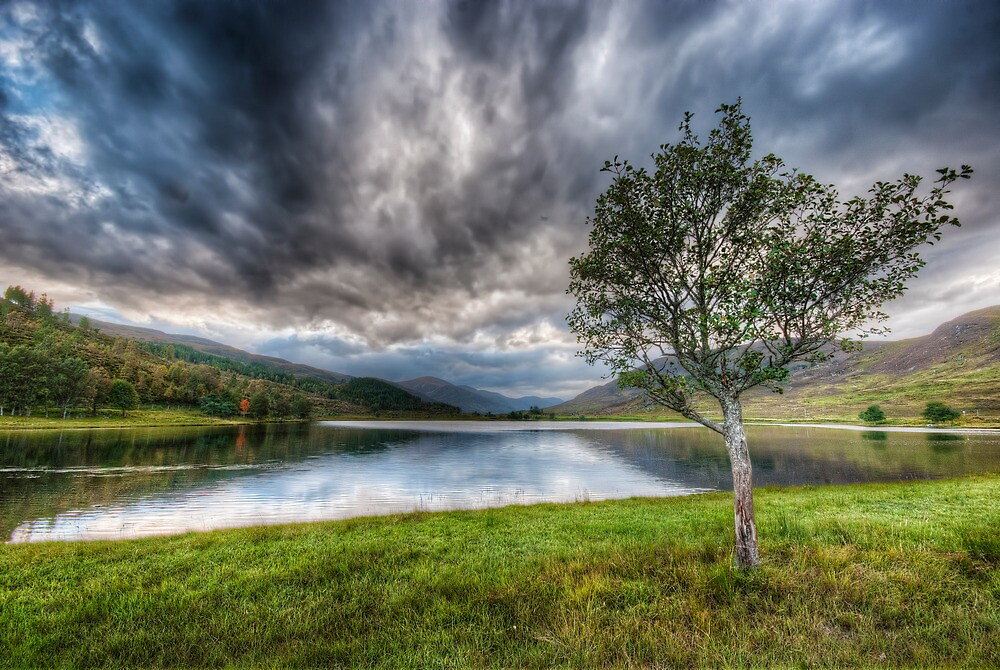 My Favourite Tree by Fraser Ross