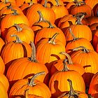 Pumpkins!! by Rebecca Bryson