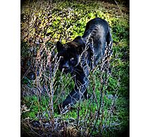 black panther Photographic Print