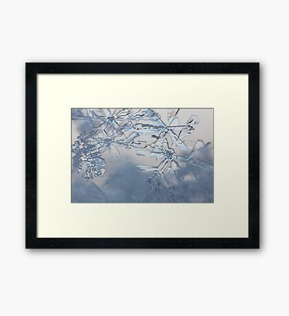 A tangle of snow flakes Framed Print