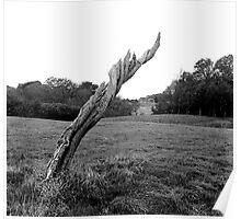 Tree Stump, Phoenix Park, Dublin Poster