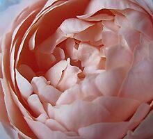 Porcelain Petals by Lunaria