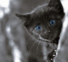 My Kitten #2 by RCphotography3