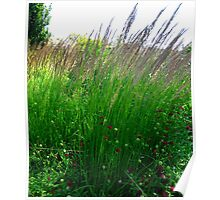 In the tall grasses of summer Poster