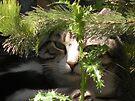 Little stray kittern by Jemma Richards
