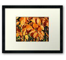 Elegy to a Tree Framed Print
