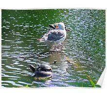 Wild Life on Stow Lake Poster