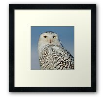 Snowy at Amherst  Framed Print