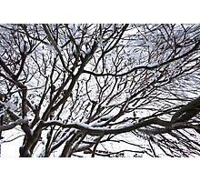 Lace Leaf Maple Photographic Print
