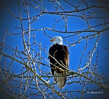 Perched upon a tree by Cmarcotte