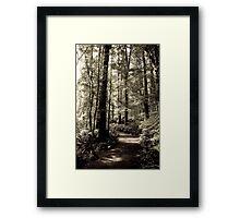 Rainforest Walk Framed Print