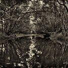 Muddy Waters by Jason Ruth