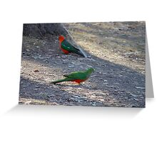 King Parrots - After TOO many years bordering on empty, Lake Eildon is on the rise, almost at full capacity shown here.   Greeting Card