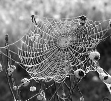 Natures Doily by ShanRenee