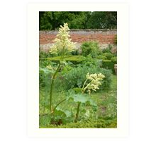 A suffolk garden Art Print