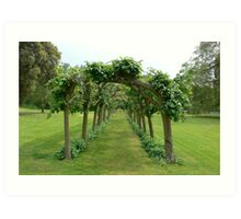 Trees form an archway. Art Print