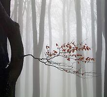 Misty Forest by Martin Rak