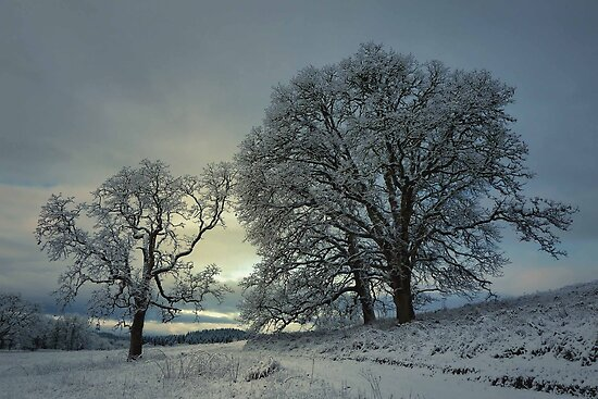 Snow and Light by Charles & Patricia   Harkins ~ Picture Oregon