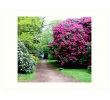 Westonbirt Arboretum Art Print