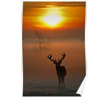 Stag sunrise 1 Poster