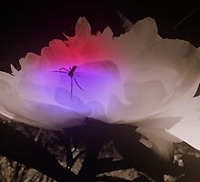 Spider Home by rmlinke77