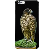 Hawk iPhone Case iPhone Case/Skin