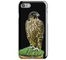 Hawk iPhone Case iPhone Case/Skin