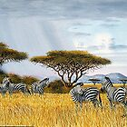 Grazing Zebras at Maasai Maara National park in Kenya by Mutan