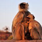 Monkey Momma by Brendan Buckley