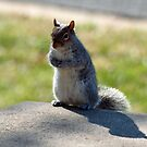 Squirrel posing by Bine