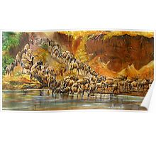 African Wildebeests migration at  Maasai Maara river   Poster