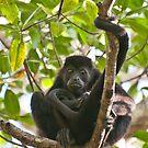 Mantled Howler Monkey II by Gary Lengyel