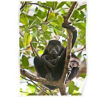 Mantled Howler Monkey II Poster