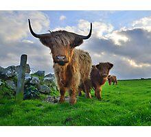 Cornwall: Heiland Coo's on the Cornish Coast Photographic Print