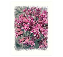 Pink Perennial Art Print