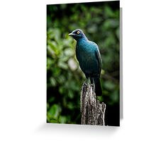 Cape Glossy Starling Greeting Card