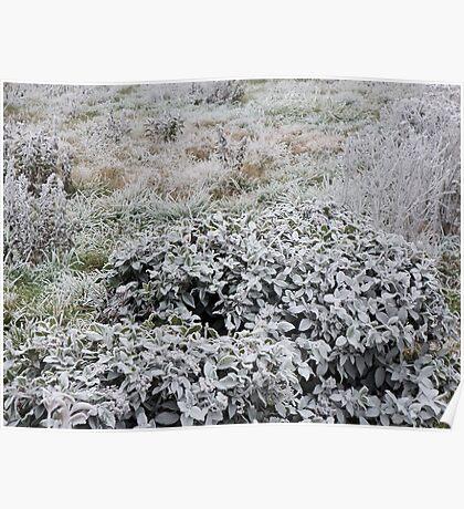 UN PARTICOLARE DEL GELO....... a detail of frost......italy... Poster