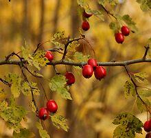 Autumn by Sandra Johansson