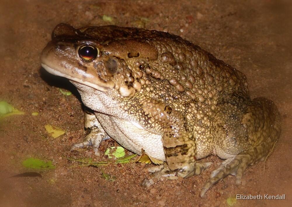 A guy in the garden (Amphibian) by Elizabeth Kendall