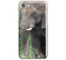 The Elephant {Loxodonta Africana} iPhone Case/Skin