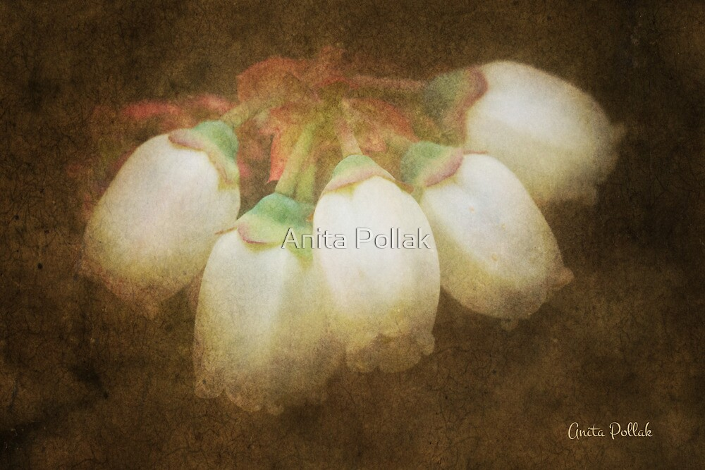 Antique Blueberry Flowers by Anita Pollak