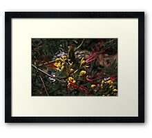 Odd Yellow Flower  Framed Print