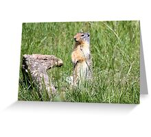 Watcha Doin? (Columbian Ground Squirrel) Greeting Card