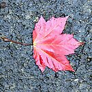 The Maple Leaf Forever by Jeanette Muhr